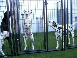 dog kennels on artificial grass