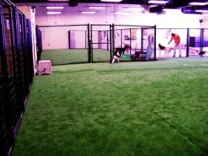 completed indoor pet area installation with artificial grass